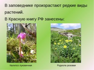 В заповеднике произрастают редкие виды растений. В Красную книгу РФ занесены: