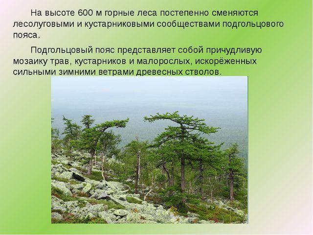 Навысоте 600м горные леса постепенно сменяются лесолуговыми икустарниковы...