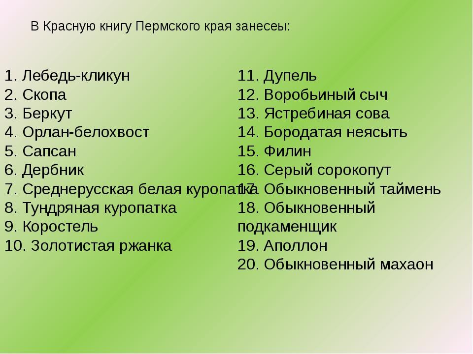 В Красную книгу Пермского края занесеы: 1. Лебедь-кликун 2. Скопа 3. Беркут...