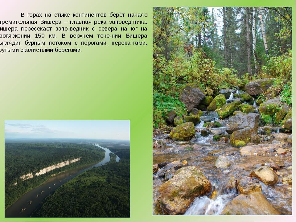 В горах на стыке континентов берёт начало стремительная Вишера – главная рек...