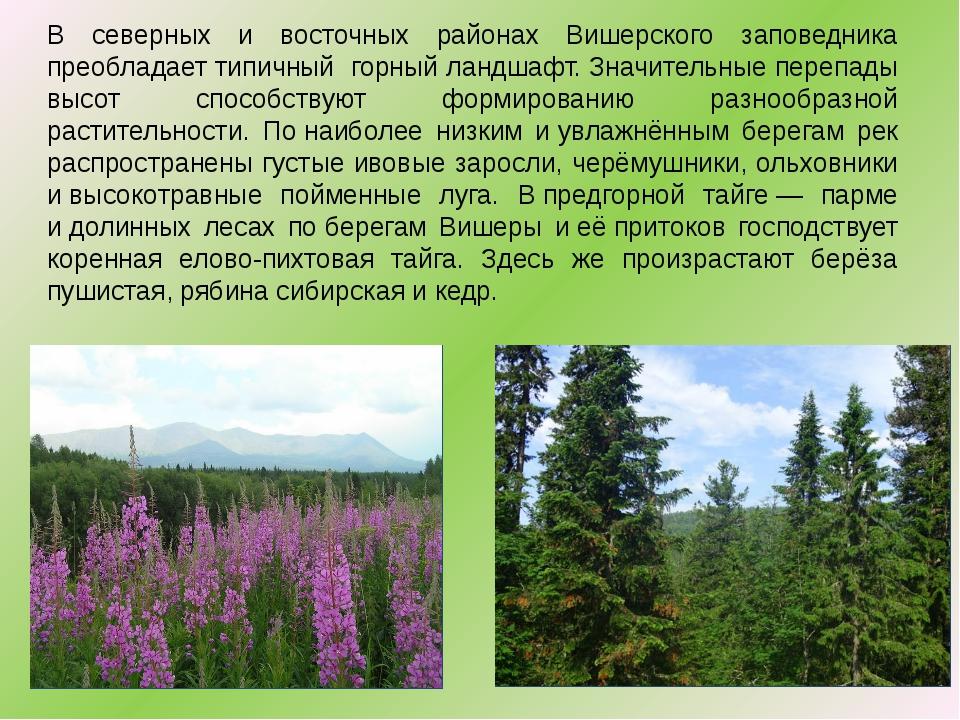 В северных и восточных районах Вишерского заповедника преобладает типичный г...