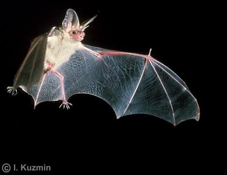 http://animalwild.net/uploads/posts/2011-04/1301659747_114.jpg