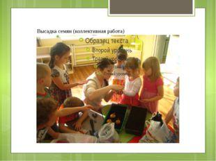 Высадка семян (коллективная работа)