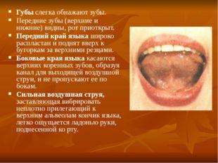 Губы слегка обнажают зубы. Передние зубы (верхние и нижние) видны, рот приотк