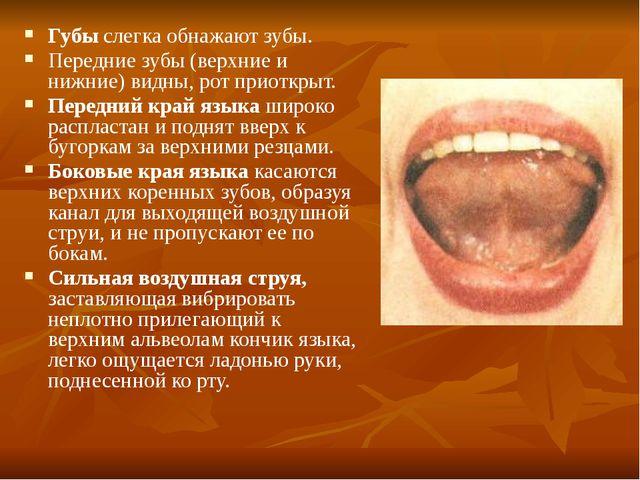 Губы слегка обнажают зубы. Передние зубы (верхние и нижние) видны, рот приотк...