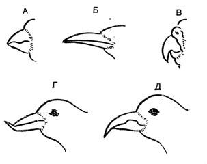 Б. Ф. Бессарабов болезни певчих и декоративных птиц книга - страница 2