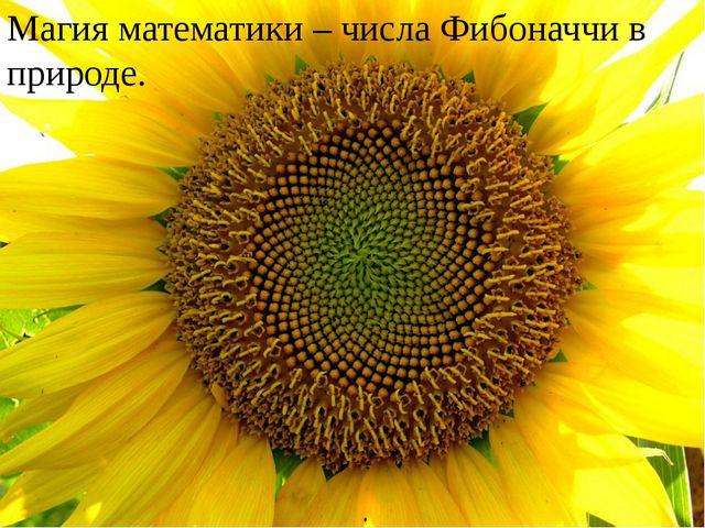 Магия математики – числа Фибоначчи в природе.