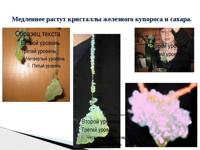 Медленнее растут кристаллы железного купороса и сахара.