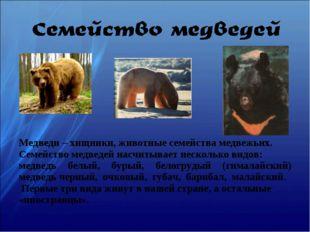Медведи – хищники, животные семейства медвежьих. Семейство медведей насчитыва
