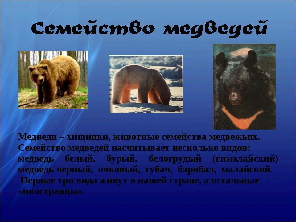 Медведи – хищники, животные семейства медвежьих. Семейство медведей насчитыва...