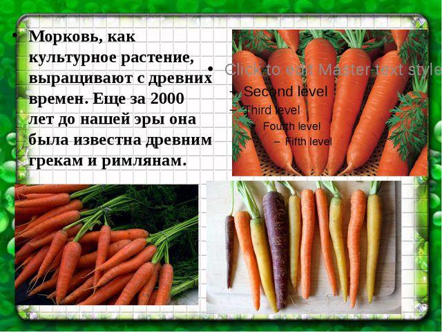 Морковь, как культурное растение, выращивают с древних времен. Еще за 2000 ле...