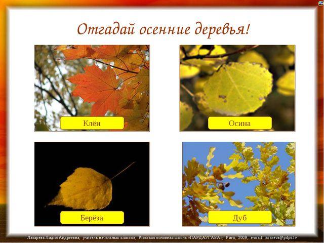 Отгадай осенние деревья! Клён Осина Дуб Берёза Лазарева Лидия Андреевна, учит...
