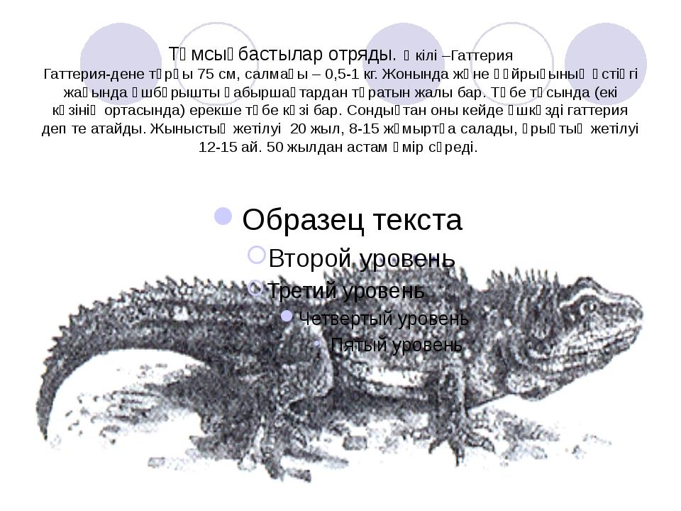 Тұмсықбастылар отряды. Өкілі –Гаттерия Гаттерия-дене тұрқы 75 см, салмағы – 0...