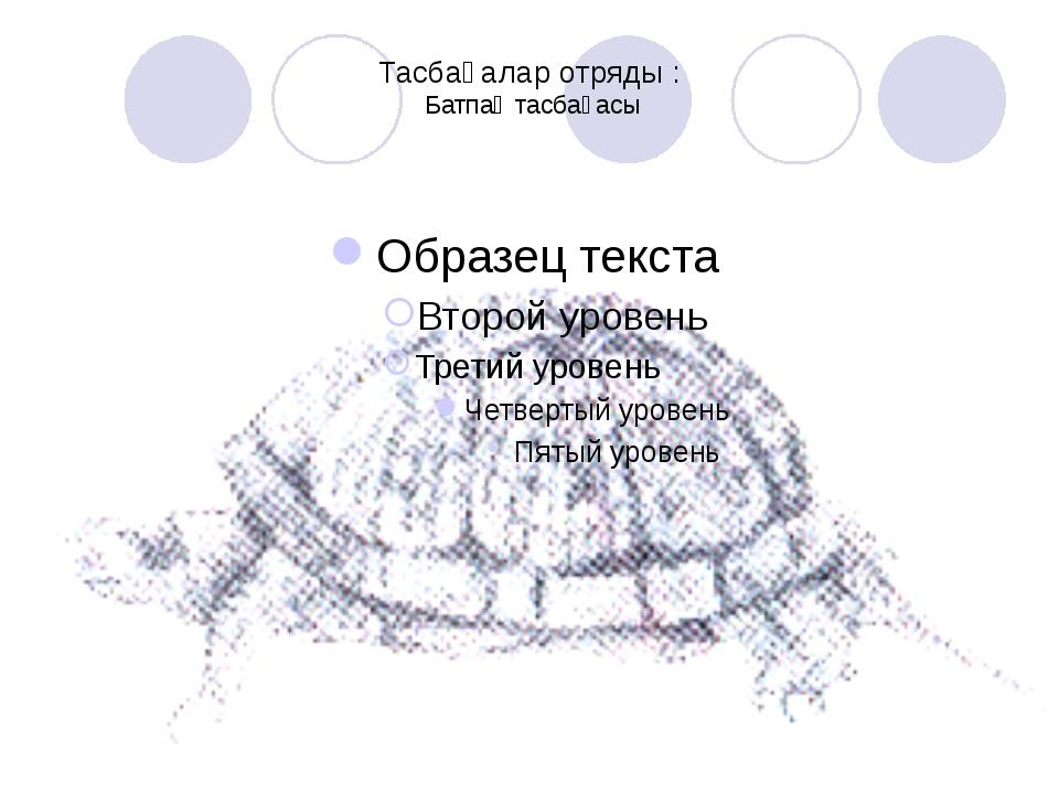 Тасбақалар отряды : Батпақ тасбақасы