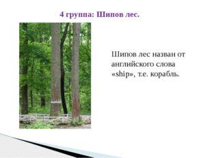 Шипов лес назван от английского слова «ship», т.е. корабль. 4 группа: Шипов