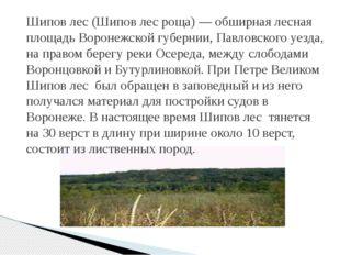 Шипов лес (Шипов лес роща) — обширная лесная площадь Воронежской губернии, Па