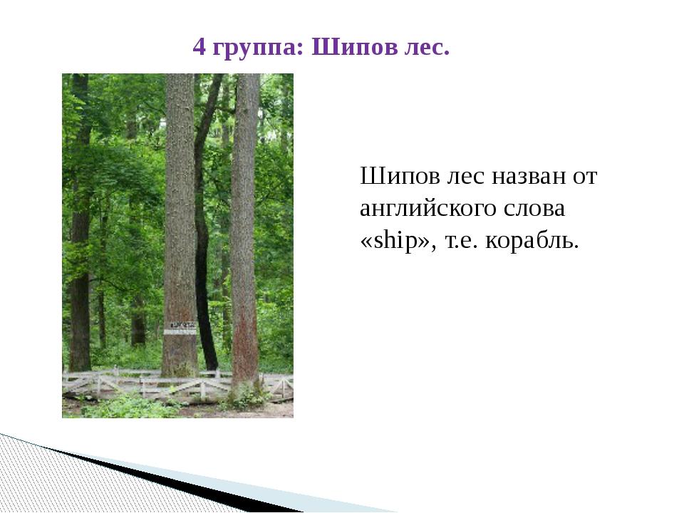 Шипов лес назван от английского слова «ship», т.е. корабль. 4 группа: Шипов...