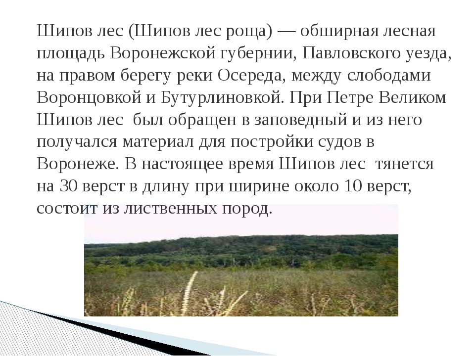 Шипов лес (Шипов лес роща) — обширная лесная площадь Воронежской губернии, Па...