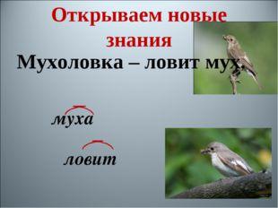 Мухоловка – ловит мух. муха ловит Открываем новые знания