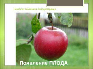 Появление ПЛОДА Результат опыления и оплодотворения