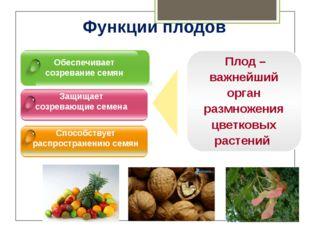 Обеспечивает созревание семян Защищает созревающие семена Способствует распр