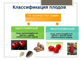 Классификация плодов ПРОСТОЙ ПЛОД, ОБРАЗУЮЩИЙСЯ ИЗ ЦВЕТКА С ОДНИМ ПЕСТИКОМ ПО