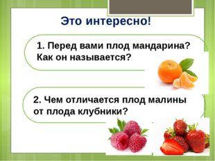 Это интересно! 1. Перед вами плод мандарина? Как он называется? 2. Чем отлича