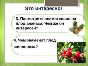 Это интересно! 3. Посмотрите внимательно на плод ананаса. Чем же он интересен