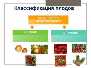Закрепление Задание 2. Тест 1. Плод – ягода у: а) вишни в) крыжовника б) слив