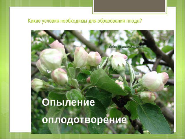 Какие условия необходимы для образования плода? Опыление оплодотворение