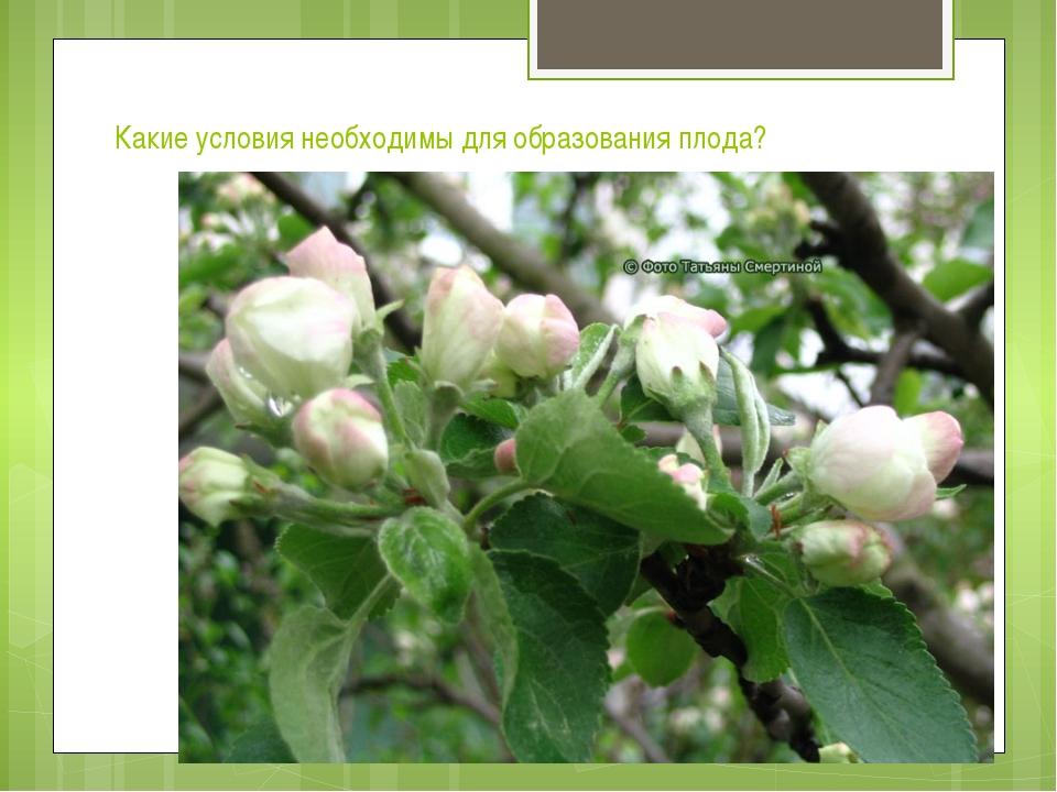 Какие условия необходимы для образования плода?