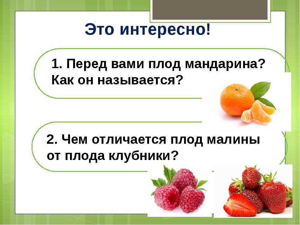 Это интересно! 1. Перед вами плод мандарина? Как он называется? 2. Чем отлича...