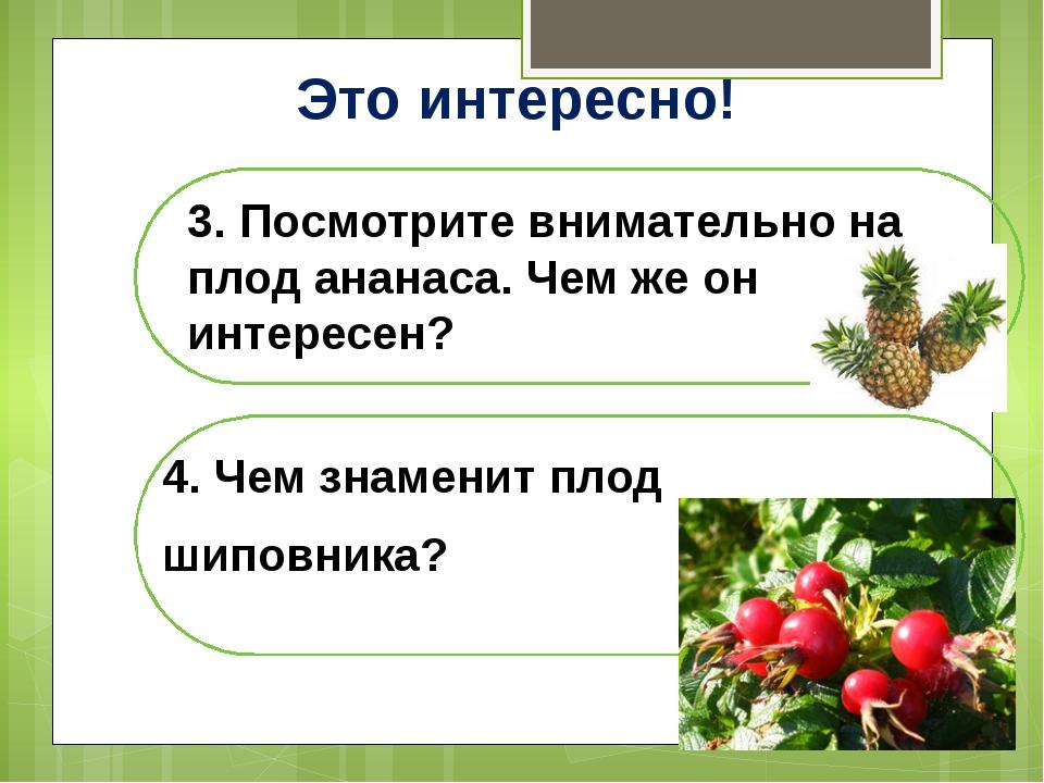 Это интересно! 3. Посмотрите внимательно на плод ананаса. Чем же он интересен...