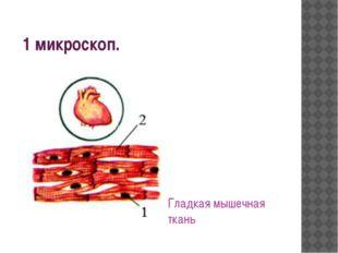 1 микроскоп. Гладкая мышечная ткань