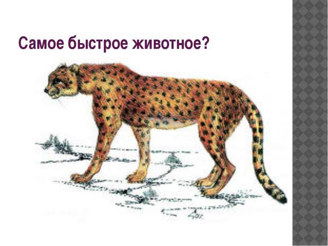 Самое быстрое животное?