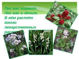 Лес нас кормит. Лес нас и лечит. В нём растёт много лекарственных растений.