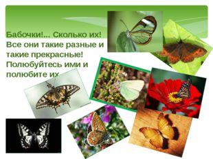 Бабочки!... Сколько их! Все они такие разные и такие прекрасные! Полюбуйтесь