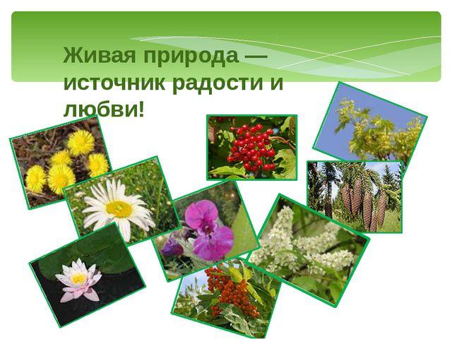 Живая природа — источник радости и любви!