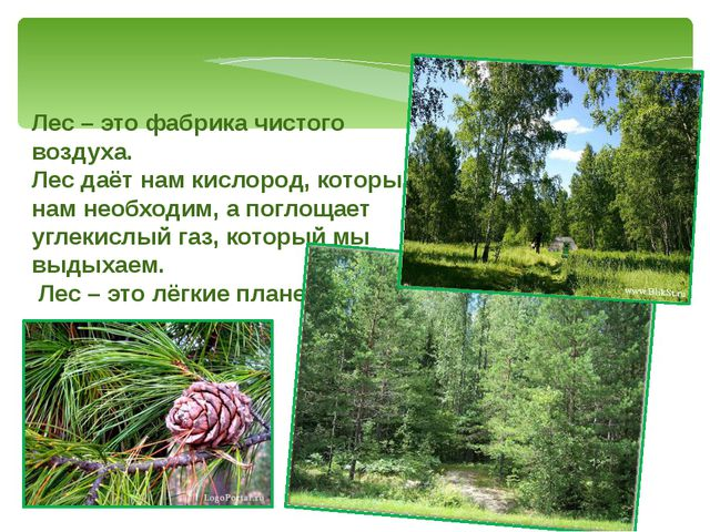 Лес – это фабрика чистого воздуха. Лес даёт нам кислород, который нам необход...