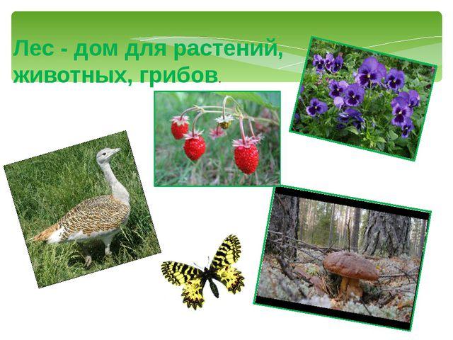 Лес - дом для растений, животных, грибов.
