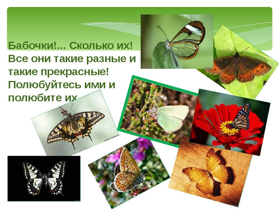 Бабочки!... Сколько их! Все они такие разные и такие прекрасные! Полюбуйтесь...