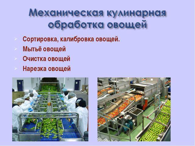 Сортировка, калибровка овощей. Мытьё овощей Очистка овощей Нарезка овощей