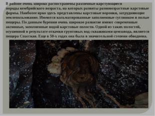 В районе очень широко распостранены различные карстующиеся породыкембрийског
