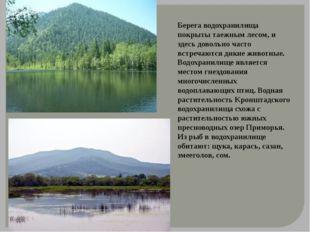 Берега водохранилища покрыты таежным лесом, и здесь довольно часто встречаютс