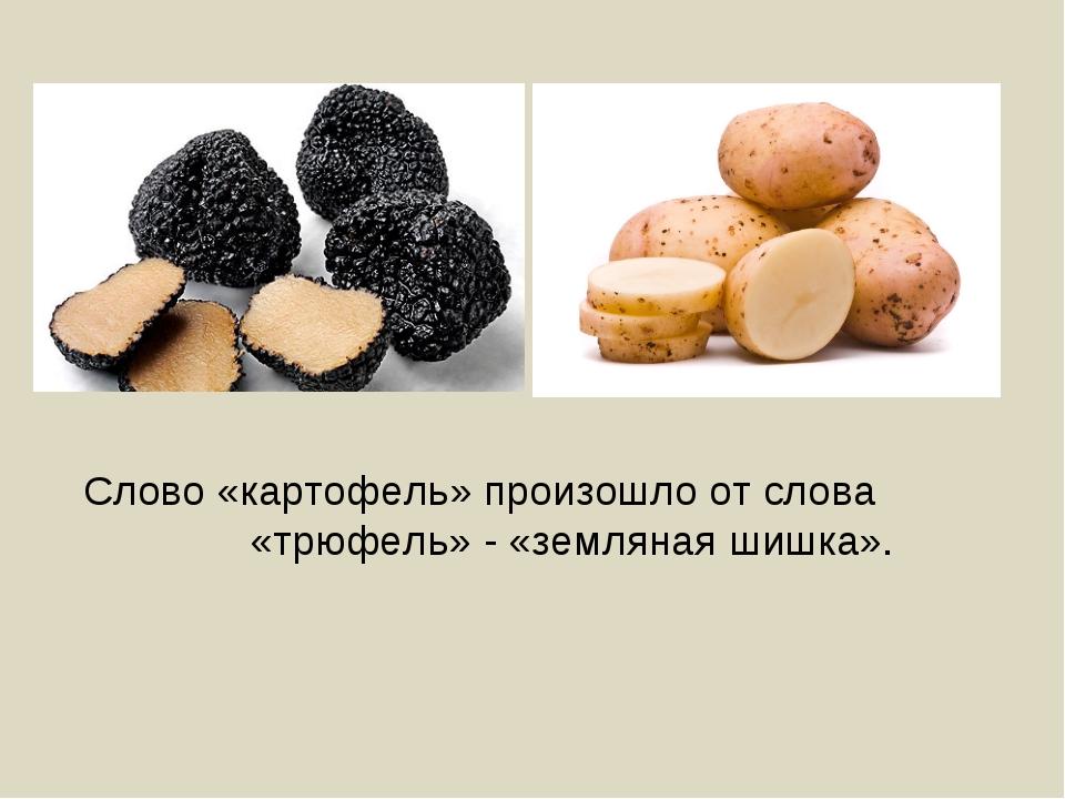 Слово «картофель» произошло от слова «трюфель» - «земляная шишка».