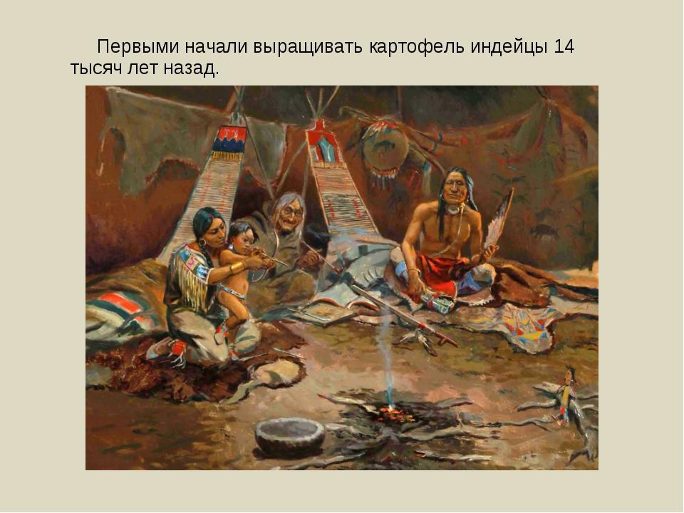 Первыми начали выращивать картофель индейцы 14 тысяч лет назад.