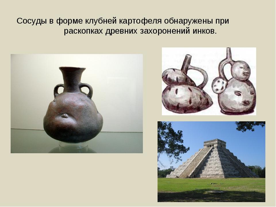 Сосуды в форме клубней картофеля обнаружены при раскопках древних захоронений...