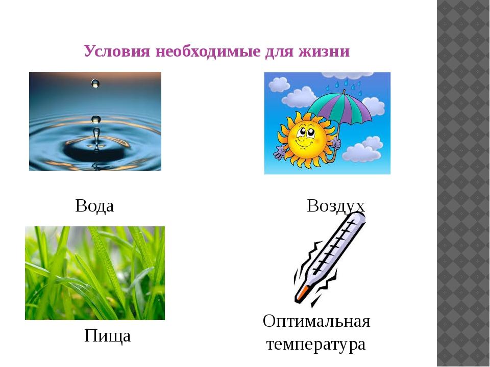 Условия необходимые для жизни Вода Воздух Оптимальная температура Пища