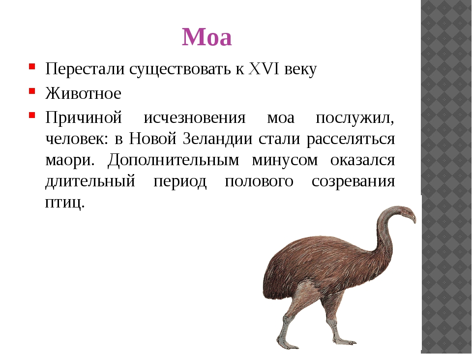 Моа Перестали существовать к XVI веку Животное Причиной исчезновения моа посл...