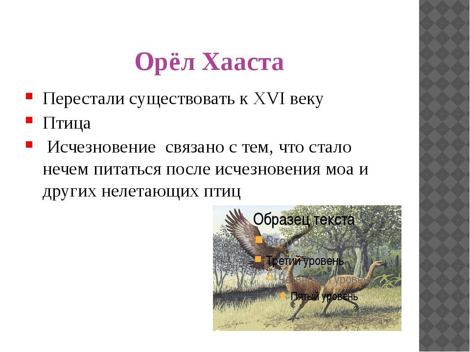 Орёл Хааста Перестали существовать к XVI веку Птица Исчезновение связано с те...